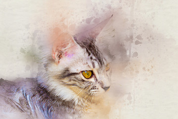 Watercolor portrait of tabby cat. art paint color on canvas for background