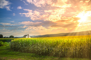 Foto op Canvas Meloen Vibrant sunset in corn field with sun rays