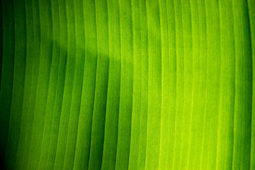 Texture Shown on Green  leaves