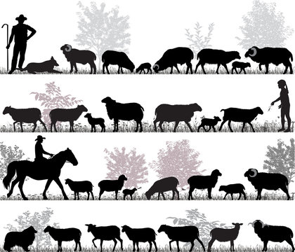 Silhouettes of sheeps, rams and lambs outdoors