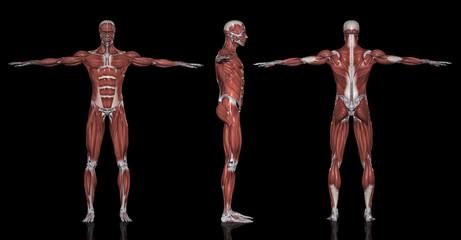 筋肉図方位別一覧
