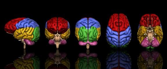 脳色別部位