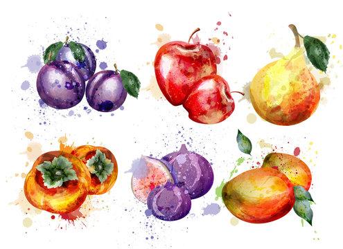 Watercolor fruits set Vector. Apple, plum, pear summer fruit compositions