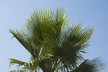 Green palm tree and sky