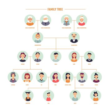 Vector family tree genealogy branches template