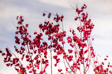 red flowers on long bushes