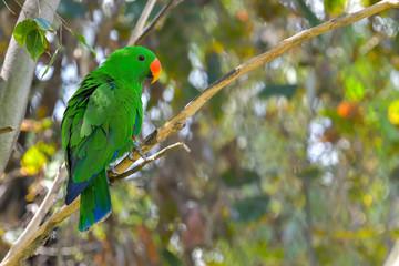 Portrait of colorful parrot against jungle background