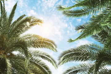 green palm and blue sky background