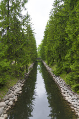 A small water channel with coniferous trees and a bridge.