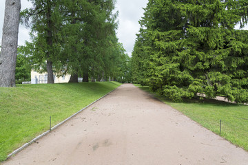 Tsarskoye Selo Pushkin, St. Petersburg, alley in the Park, trees and shrubs, walking paths.
