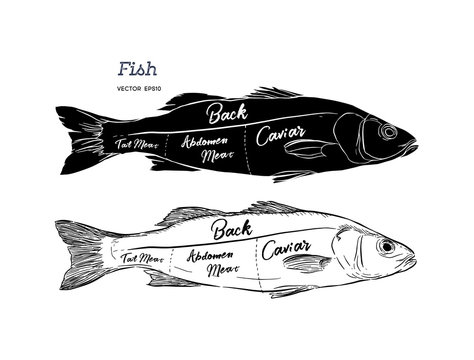 Poster fish cutting scheme lettering vector.