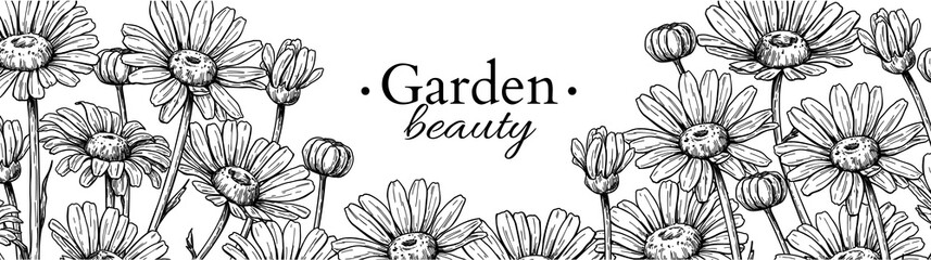 Daisy flower banner drawing. Vector hand drawn engraved floral border. Chamomile