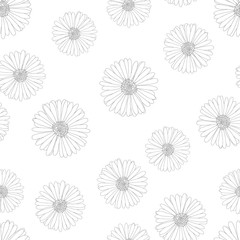 Aster, Daisy Outline Seamless on White Background