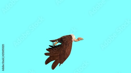 Vulture Bird Predatory Flying cycle Side Blue Screen 3D