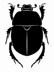 illustration of beetle , vector draw