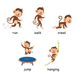 cartoon monkey vocabulary vector illustration