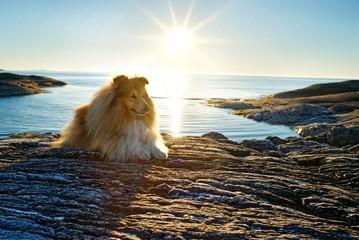 Norwegen - Urlaub mit Hund