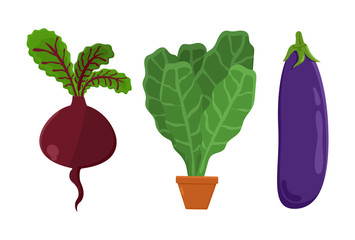 Vegetarian Food Set Beetroot, Vector Illustration