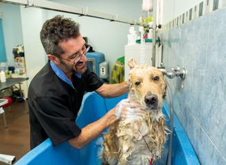 Pet groomer grooming dog washing in pet washing salon