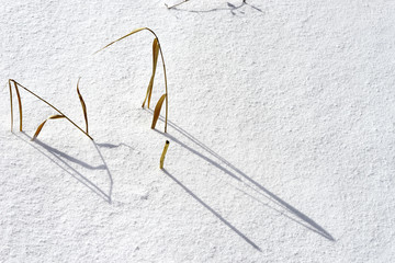 Dry grass stems on a snow background