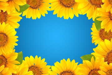 Frame of sunflowers on a blue background. Background with copy space.