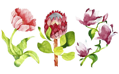 Flowers watercolor clipart. Perfect for you postcard design, wallpaper, print, invitations, patterns, travel, poster, packaging etc.
