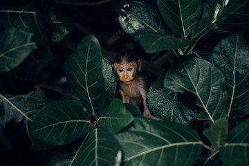 Baby monkey in forest