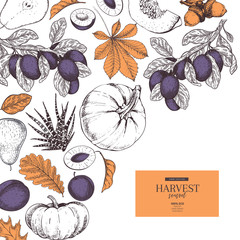 Hand drawn banner of autumn harvest fruits, vegetables. Vector vintage engraved style. Pumpkin, plum, oak, mapple, chestnut leaves. Fall holiday flyer. Thanksgiving, farm festival, food market.