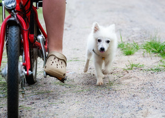 Puppy walks with the child