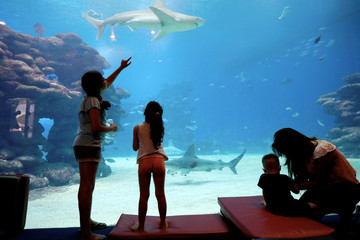 Visitors look at fish at the Underwater Observatory Marine Park in Eilat