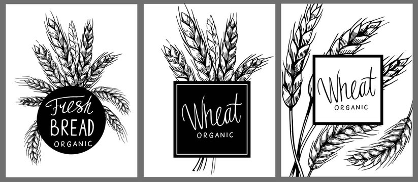 Set of banners with wheat ears. Vector illustration