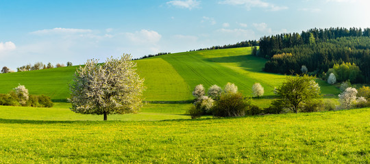 Beautiful spring landscape. Fresh green hills and fields with blossoming trees. Blue skies, clouds.