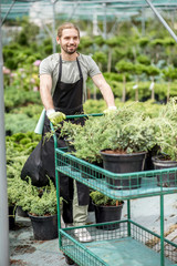Handsome gardener pushing shopping cart wuth plants working in the greenhouse of the plant shop
