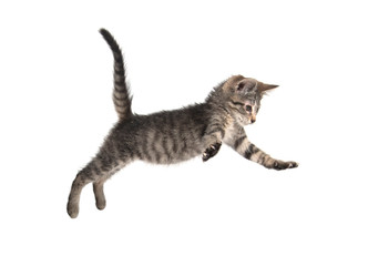 Cute tabby kitten jumping