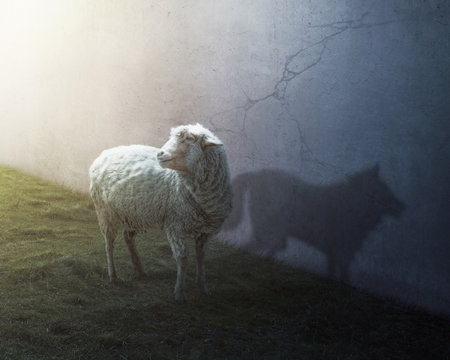 Sheep and wolf