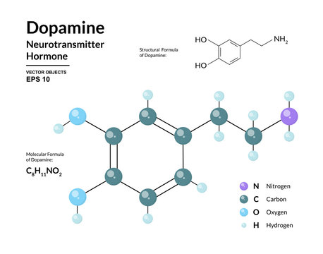 Dopamine Hormone. Neurotransmitter. Structural Chemical Molecular Formula and 3d Model. Atoms are Represented as Spheres with Color Coding. Vector Illustration
