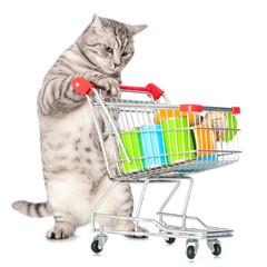 Getigerte Katze mit Einkaufswagen voller Futter