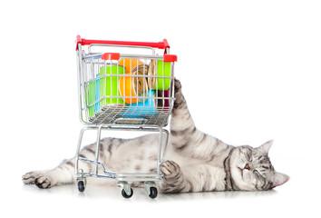 Zufriedene Katze mit Einkaufswagen voller Futter