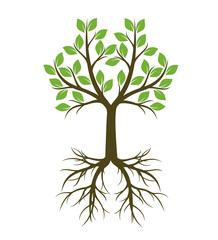 Green shape of Tree with Root. Vector Illustration.