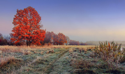 Aluminium Prints Autumn Autumn nature landscape. Colorful red foliage on branches of tree at meadow with hoarfrost on grass in the morning. Panoramic view on scenic nature at fall. Perfect morning at outdoor in november