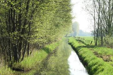 beek en bosrand met uitbottende bomen in het voorjaar en weiland met afrastering