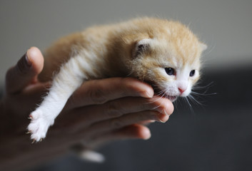 Cropped hands of woman holding kitten at home