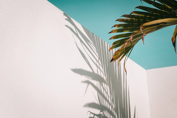 Palm tree leaves against turquoise sky and white wall. Pastel colors, creative colorful minimalism. Copy space for text