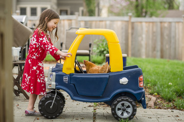 Side view of girl looking at chicken in toy car