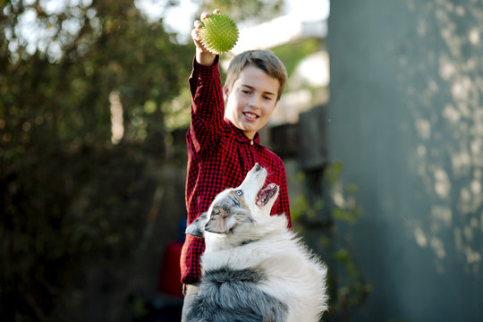 Boy playing with dog while standing at yard