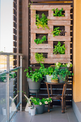 Green grass and plant and wood pallet decoration on the brown wooden wall.