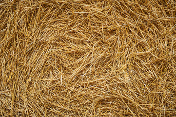 Dry golden yellow straw grass background texture after havesting