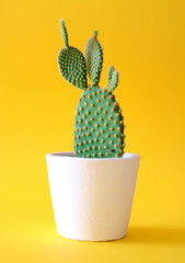 Spoed Foto op Canvas Cactus Bunny ears cactus in a white planter isolated on a bright yellow background