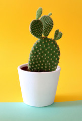 Bunny ears cactus in a white planter isolated on a bright yellow and turquoise background