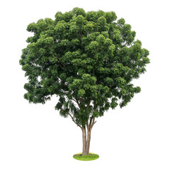 Isolate the neem tree leaves green.